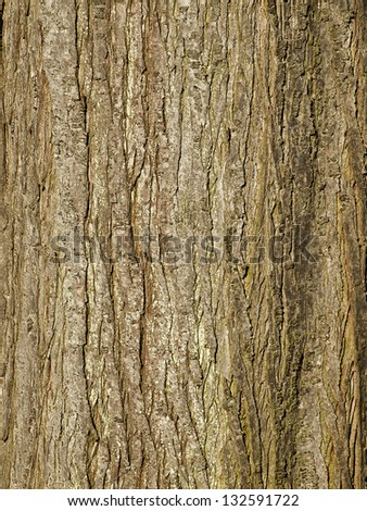 photo of the bark of an more then 100 year old oak - use as texture or background - stock photo