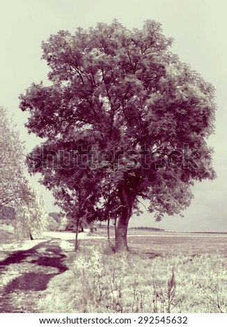 Photo of tree processed to simulate infrared image.
