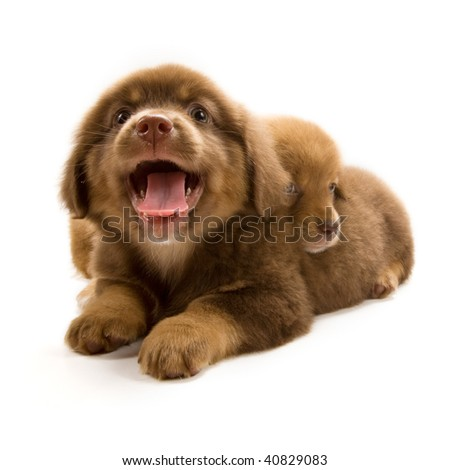 Photo of two cute puppies isolated on white background - stock photo