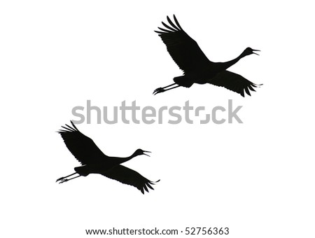 Photo of Two Sandhill Cranes Silhouetted Against White Sky