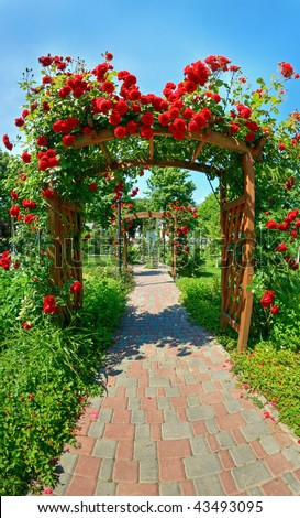 Photo of very nice garden with lots of roses - stock photo