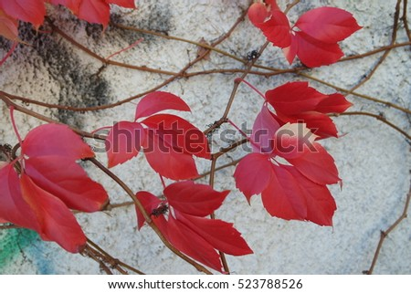 photo of wall with fall leaf