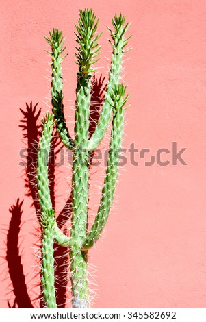 Photo Picture of a Tropical Cactus Texture Background - stock photo