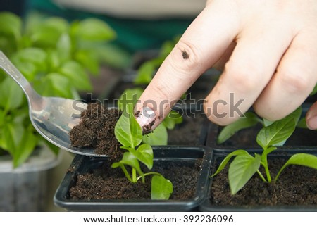 Photo planting seedlings in the home tray