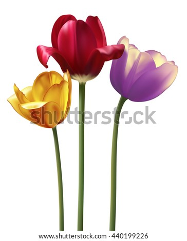 Photo realistic raster tulips isolated on white - stock photo