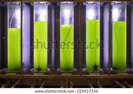 Photobioreactor in lab algae fuel biofuel industry Algae fuel or algal biofuel is an alternative to fossil fuel that uses algae as its source of natural deposits - stock photo