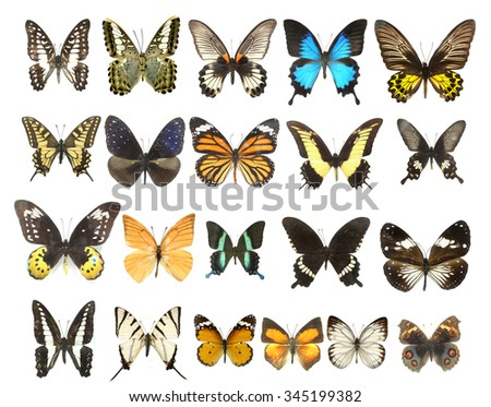 Photograph Collection of butterfly moth isolated on white background  - stock photo