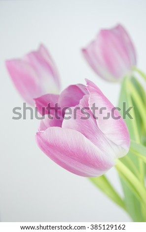 Photograph of a bunch of pink tulips on light grey background
