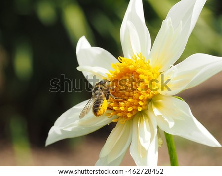 bee spring singles Search the world's information, including webpages, images, videos and more google has many special features to help you find exactly what you're looking for.