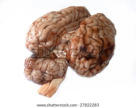 Photograph of a real brain isolated on white background