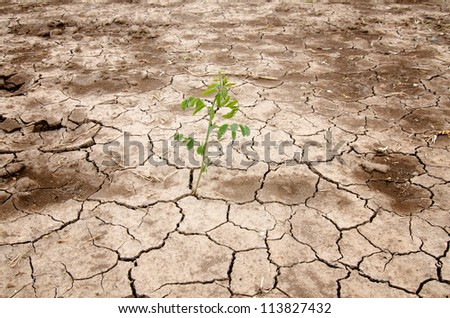 photograph of leaves sprouting from a barren land