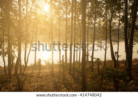 Photographer shooting landscape tropical Forest background and Cross process filter and Soft flare - stock photo