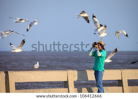 Photographer taking seagulls photo - stock photo