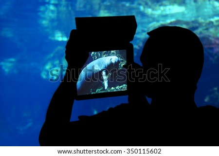 Photographing a seal aquarium. Silhouette of a man shooting a seal with a tablet aquarium - stock photo