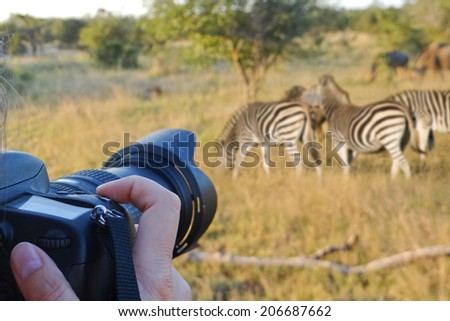Photographing wildlife, South Africa - stock photo