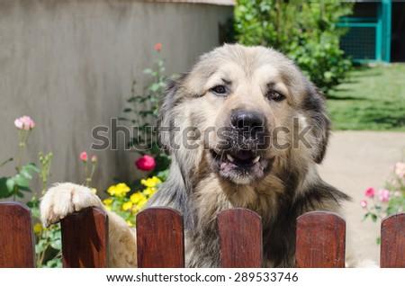 Photography of dog portrait  - stock photo
