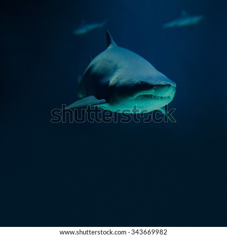 Photography shark and fish silhouettes. Deep blue ocean background. toned vintage paper, soft focus. copy space - stock photo