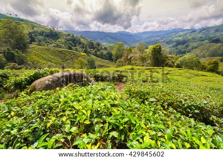 Photos landscape BOH Tea Plantation in the of Cameron Highlands in Malaysia - stock photo