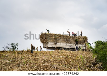 Phu Yen, Vietnam - Mar 31, 2016: Farmers loading sugar cane into truck by harvesting time in Tay Nguyen, central highlands of Vietnam