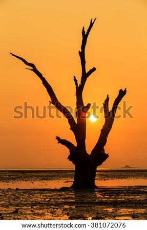 Phuket sunrise with orange background and old tree on the East coast of Phuket - stock photo
