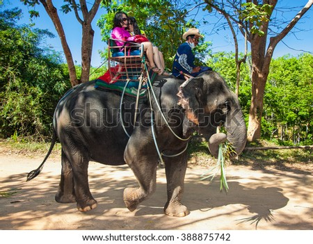 Phuket,Thailand- Jan 24, 2016: Elephant trekking on Jan 24, 2016 in Phuket island, tourists attraction. Thailand. - stock photo