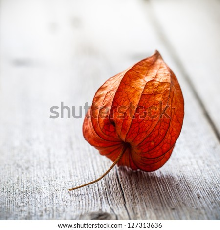 Physalis alkekengi on wood - stock photo