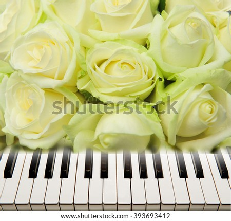 Piano keys on a background of white roses. - stock photo