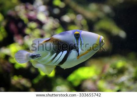 Picassofish - stock photo