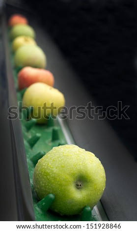 Picked apples on a conveyor belt - stock photo