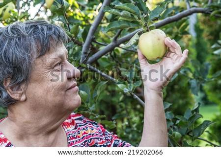 picking apple - stock photo