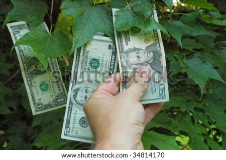 Picking from the Money Tree - stock photo