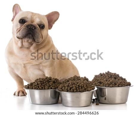 picky eater - french bulldog refusing to eat on white background - stock photo