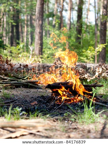 Picnic fire in the forest