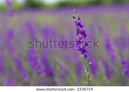Picture if a spring flower in a field - stock photo