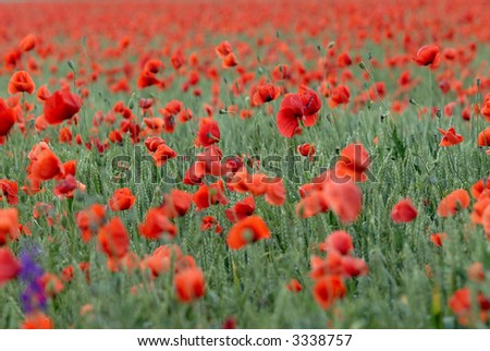 Picture if a spring flowers in a field - stock photo