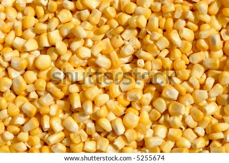 Picture of a corn beans - stock photo