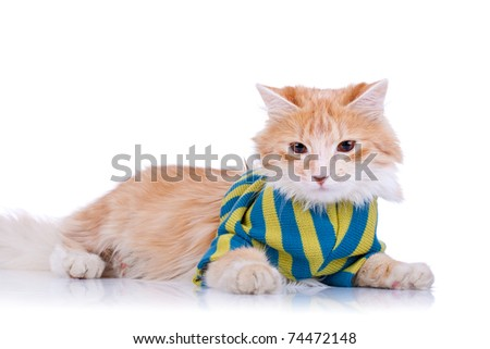 picture of a cute red and white cat wearing clothes - stock photo