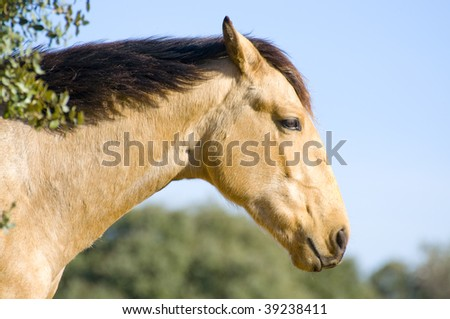 Picture of a horse on the hill.