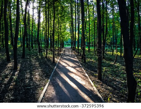 Picture of a road in a forest in Moscow in the evening