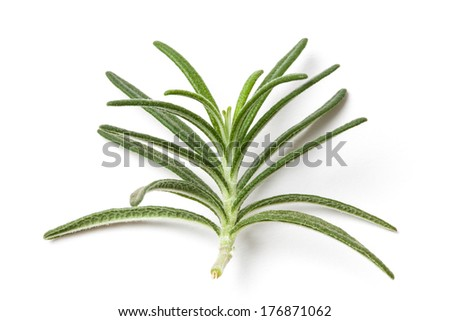 Picture of a rosemary leafs isolated on white