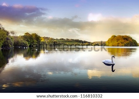 Picture of a Swan on a Lake in the Scottish Highlands - stock photo
