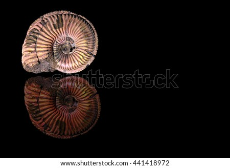 Picture of ammonite under sun light on black background with nice generated reflection