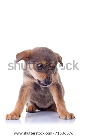 picture of an angry homeless puppy, on a white background