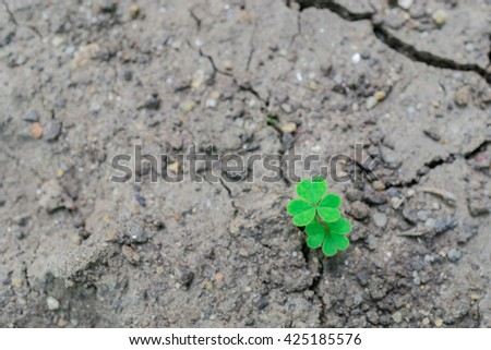 Picture of close up green leaves. Green nature view for using as background or wallpaper. Go green concept. Save world.