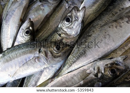 Picture of fresh fish picked recently from the ocean