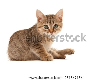 Picture of green eyes kitten isolated on white
