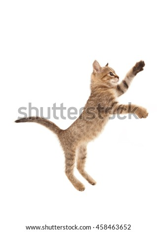 Picture of jumping kitten isolated on white - stock photo