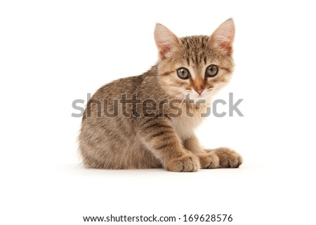 Picture of kitten isolated on white - stock photo