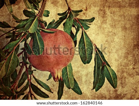 Picture of pomegranate  - stock photo