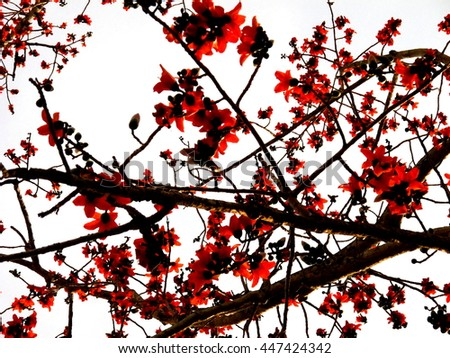 "picture of red flower called "" Bombax ceiba"" use Filter oil painting"